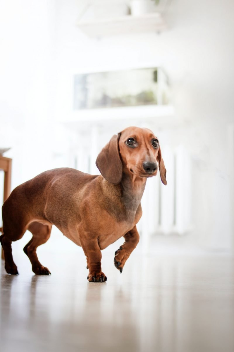 Pet Laser Therapy in Lake Placid, FL